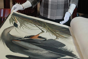 page turning for Audubon's The Birds of America
