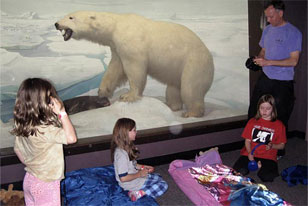 family preparing their sleeping bags next to the Polar Bear Diorama