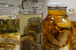 mammalolgy and herpetology alcohol specimens