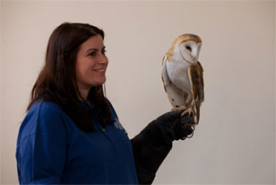 Academy teacher-naturalist with a barn owl